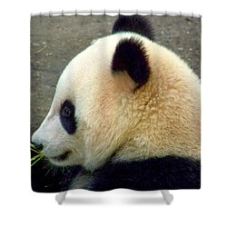 Panda Snack Shower Curtain by Karen Wiles