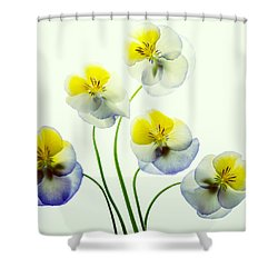 Pansies 5 Shower Curtain