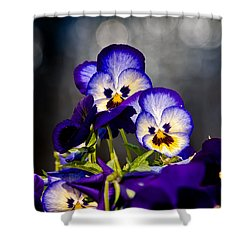 Pansies Shower Curtain by Christopher Holmes