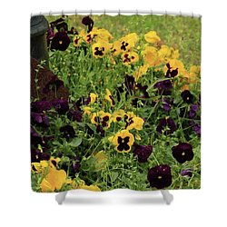 Shower Curtain featuring the photograph Pansies by Kim Henderson
