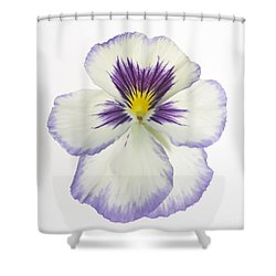 Pansy 2 Shower Curtain by Tony Cordoza