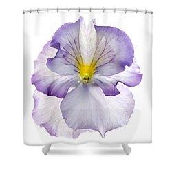 Pansy Shower Curtain by Tony Cordoza