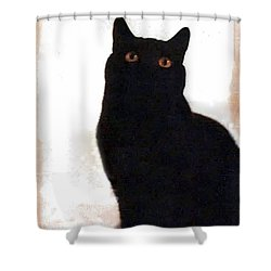 Panther The British Shorthair Cat Shower Curtain