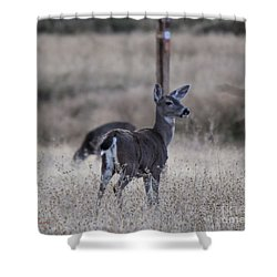 Papa Deer Shower Curtain