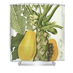 Papaya Shower Curtain