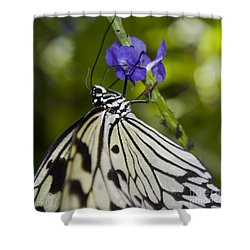 Paper Kite Butterfly Shower Curtain by Heather Applegate