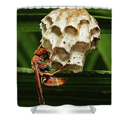Paper Wasps 00666 Shower Curtain