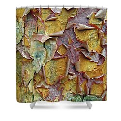 Paperbark Maple Tree Shower Curtain