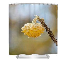 Paperbush Flower Shower Curtain