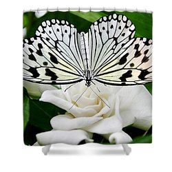 Paperkite On Gardenia Shower Curtain