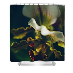 Shower Curtain featuring the photograph Paphiopedilum Villosum Orchid Lady Slipper by Sharon Mau