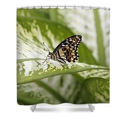 Papilio Demoleus Shower Curtain