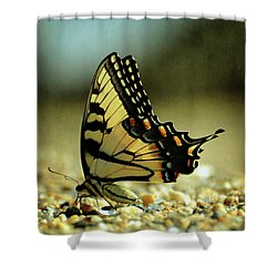 Papilio Glaucus Eastern Tiger Swallowtail Shower Curtain by Rebecca Sherman