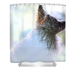 Papillon Pine Landscape Shower Curtain
