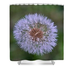 Parachute Club- Dandelion Gone To Seed Shower Curtain by David Porteus