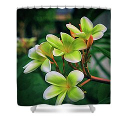 Paradise Shower Curtain by Dennis Baswell