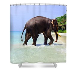 Paradise Found Shower Curtain by Jacqueline Russell