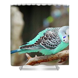 Parakeet  Shower Curtain