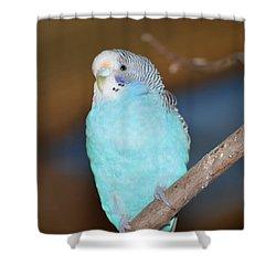 Parakeet Shower Curtain by Linda Geiger