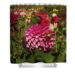 Park Blossoms  Shower Curtain