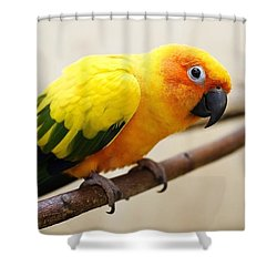 Parrot Color Feathers Bird 57691 1920x1080 Shower Curtain