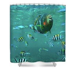 Parrot Fish Shower Curtain