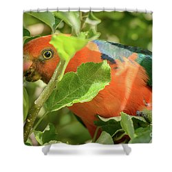 Shower Curtain featuring the photograph  Parrot In Apple Tree by Werner Padarin