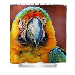 Parrot Portrait Shower Curtain