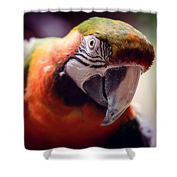 Parrot Selfie Shower Curtain