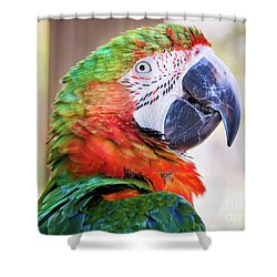 Parrot Shower Curtain by Stephanie Hayes