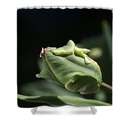 Parrot Tulip Bud Shower Curtain