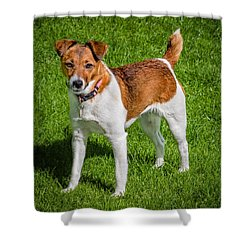 Parson Jack Russell Shower Curtain