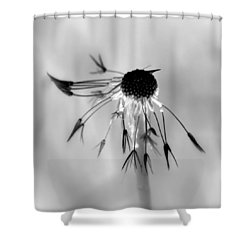 Partial Dandy Shower Curtain