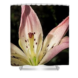 Partitioned Lily Shower Curtain by Jean Noren