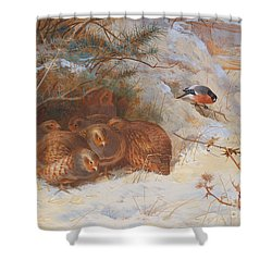 Partridge And A Bullfinch In The Snow  Shower Curtain by Archibald Thorburn
