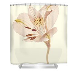 Pasae Alstroemeria By Flower Photographer David Perry Lawrence Shower Curtain
