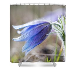 Pasque Flower's Silver Grey Hair Shower Curtain