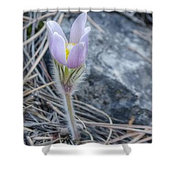 Pasque On The Rocks Shower Curtain