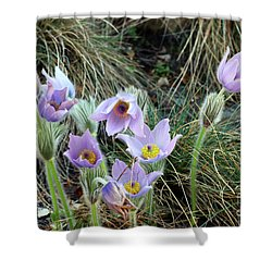 Shower Curtain featuring the photograph Pasqueflower by Michal Boubin