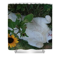 Passed Out Under The Daisies Shower Curtain by Marna Edwards Flavell