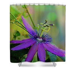 Passion Dancer Shower Curtain