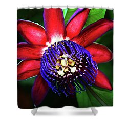 Shower Curtain featuring the photograph Passion Flower by Anthony Jones