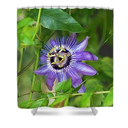 Passion Flower Betty Myles Young Shower Curtain