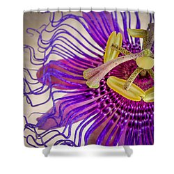 Passion Flower Squared Shower Curtain by TK Goforth