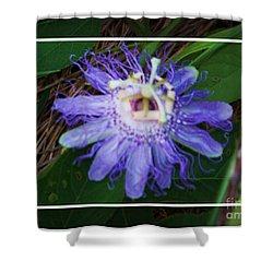 Passion Flower With Dark Border Shower Curtain