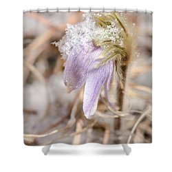 Past Pasque Shower Curtain