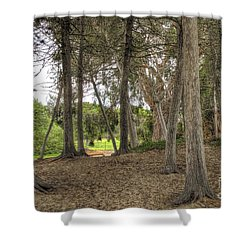 Past The Beach And Through The Trees Shower Curtain
