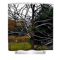 Shower Curtain featuring the photograph Past The Branches by Diane Miller