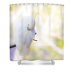 Pastel Cockatoo Shower Curtain by Avalon Fine Art Photography