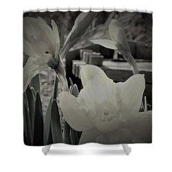 Pastel Daffodil Shower Curtain